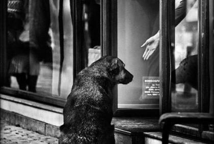 Как пристраивать животное