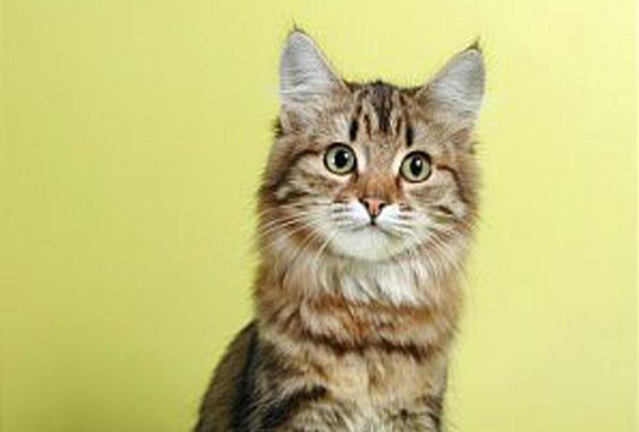 Взрослые кошки (от 1 года)