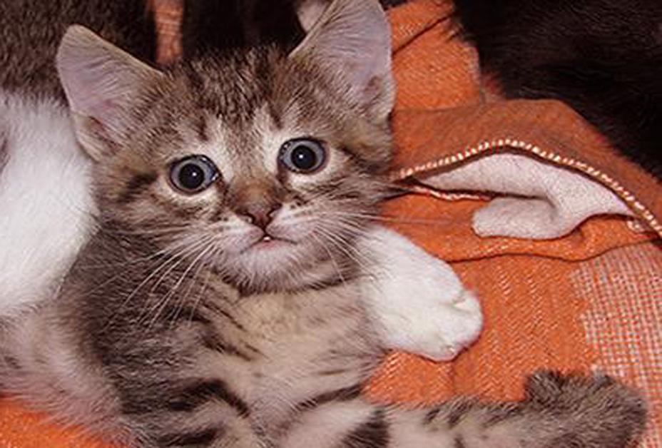 Котята (от 1 мес до 1 года)