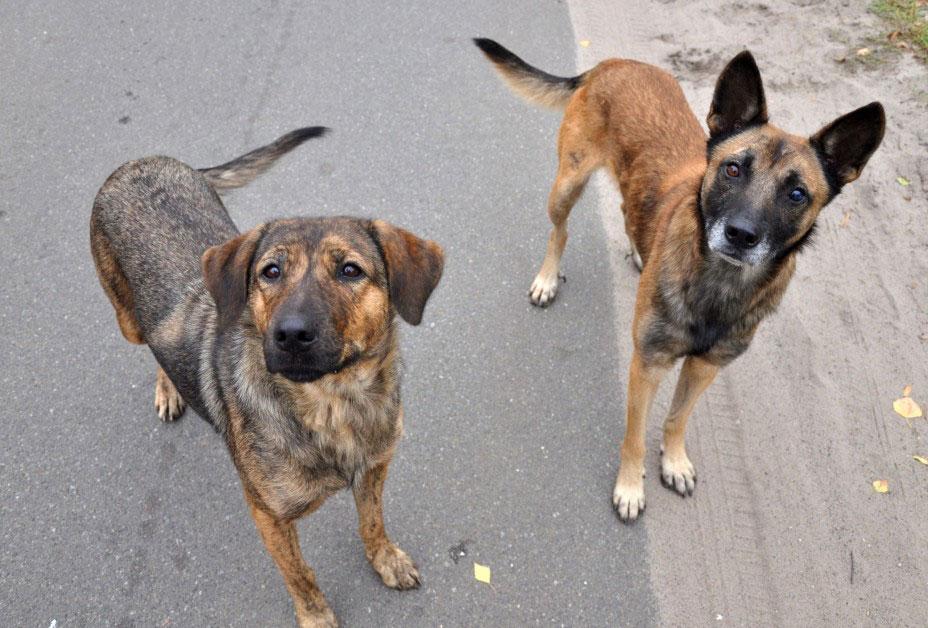 Взрослые собаки (от 1 года)